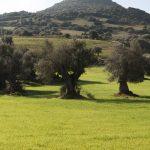 La Sardegna in inverno, cosa fare e dove andare