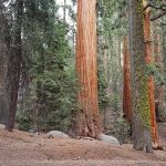 I giganti del Sequoia National Park